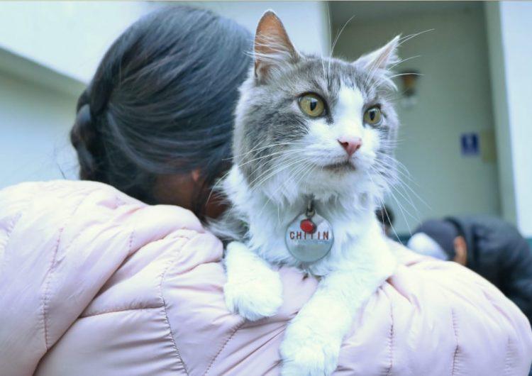 Habrá jornada gratuita de esterilización canina y felina en Jesús María