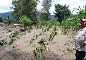 Afectadas 6 mil hectáreas de cultivos