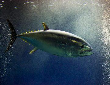 Comer pescado durante el embarazo: ¿una buena o mala decisión?