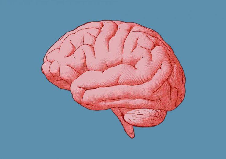 ¿Qué relación hay entre el trastorno bipolar, la esquizofrenia y la evolución del cerebro?