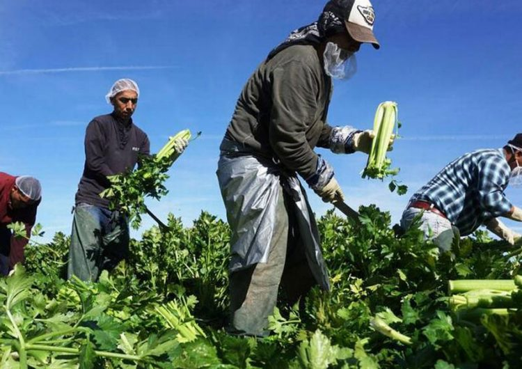 Pequeños campesinos producen el 70% de alimentos en el mundo: Repam