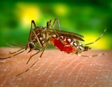 San Luis Potosí, cuarto lugar en casos de dengue