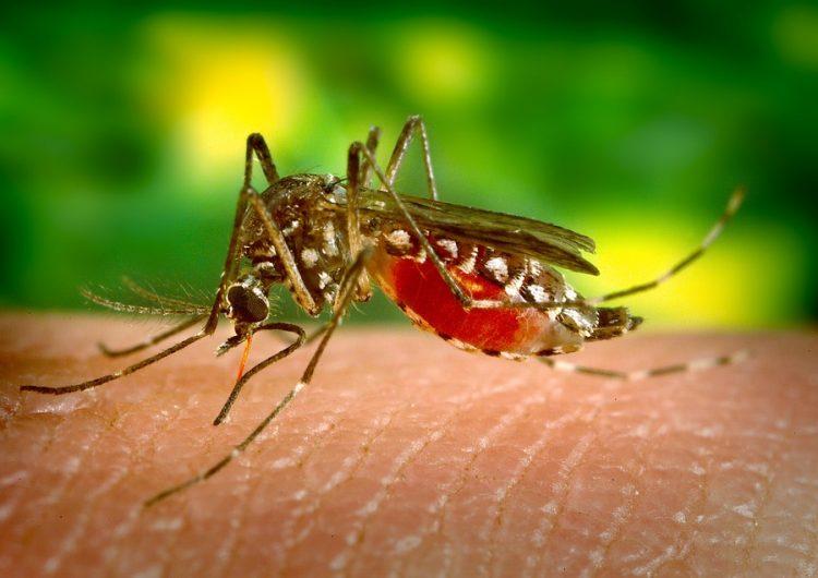 SLP es ya la tercera entidad con más casos de dengue; el aumento está focalizado en Tamazunchale, explica Departamento de Vigilancia y Urgencias Epidemiológicas