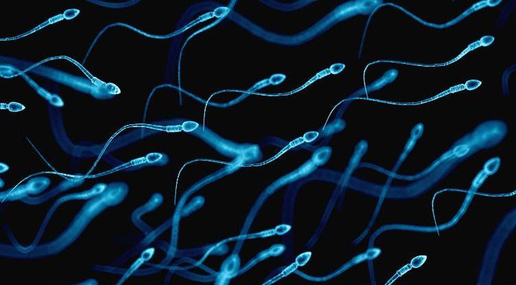Calzoncillos muy ajustados en los hombres evitan la producción de espermatozoides, según estudio