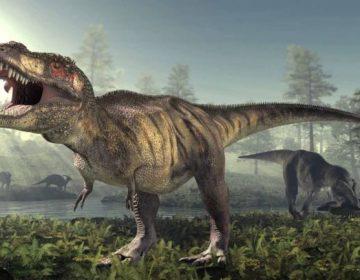 ¿Por qué ocurren las extinciones masivas? Este estudio nos acerca a la respuesta