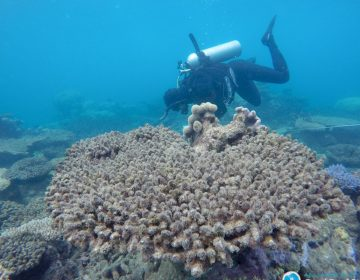 El turismo contra la ciencia: el enfrentamiento por la Gran Barrera de Coral