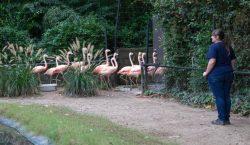 Zoológico de Carolina del Sur mueve a 2,000 animales para…