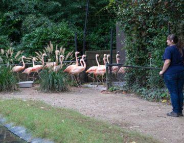 Zoológico de Carolina del Sur mueve a 2,000 animales para protegerlos del huracán Florence