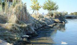 Inmensas telarañas cubren una playa en Grecia por temporada de…