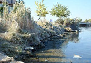 Inmensas telarañas cubren una playa en Grecia por temporada de apareamiento (fotos y video)