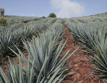 Jalisco muestra lo mejor de la región gracias al turismo