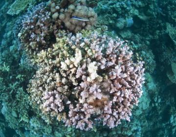 La Gran Barrera: Impactante devastación del coral en el corazón de la estructura viva más grande del mundo