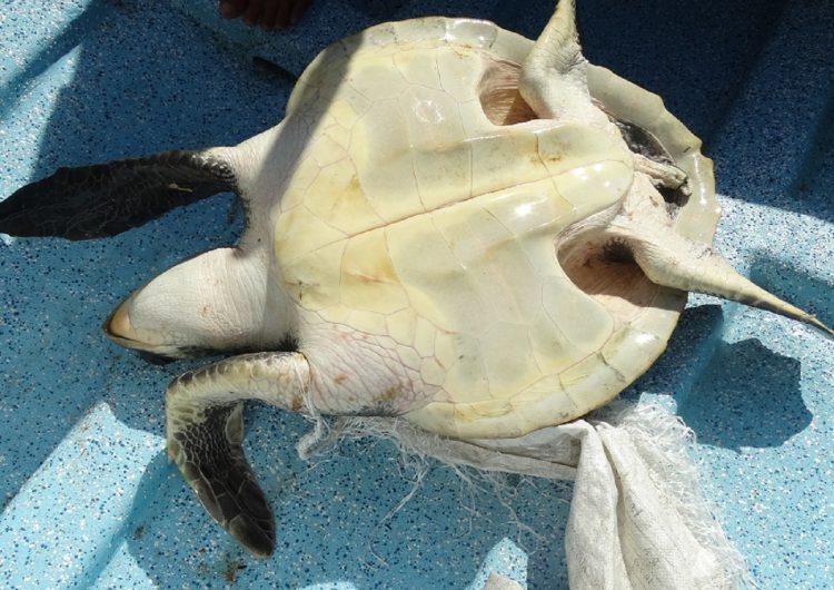 Plásticos amenazan vida marina