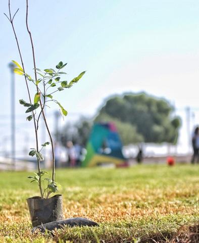 Buscará municipio capital crear más bosques urbanos