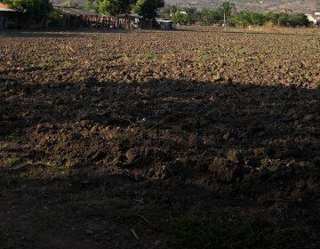 Sequía atípica siniestra 500 mil hectáreas de cultivo: Sedapa