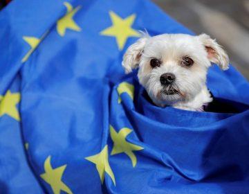 """""""Guauferéndum"""": Cientos de perros ladran en Londres contra el Brexit"""