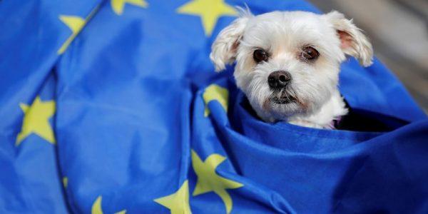 perros-protesta-londres-brexit