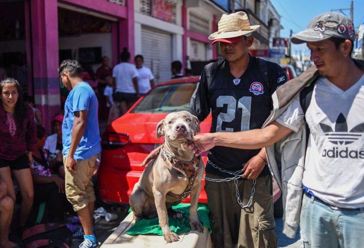 Bolillo, el perro que atravesó la frontera sur de México junto a la caravana migrante