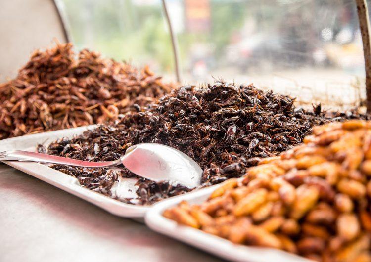Un manjar de insectos para combatir la desnutrición