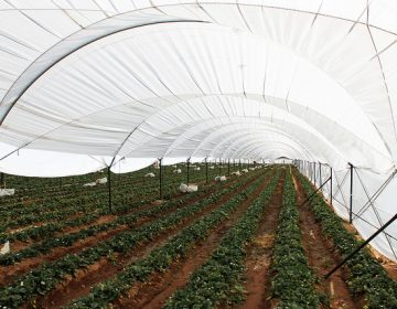Capacitarán a agroindustriales locales con empresas internacionales