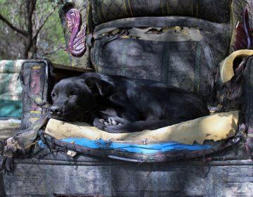 Minimiza Fiscalía maltrato animal: activistas