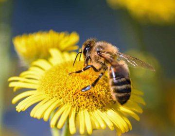 Llega a Querétaro el primer festival para salvar abejas