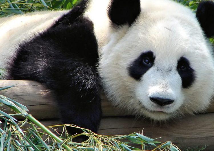 Seis de cada 10 especies animales han desaparecido en los últimos 40 años, advierte WWF