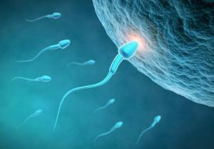 Estudio sobre el pene relaciona la infertilidad masculina con el tamaño de los genitales