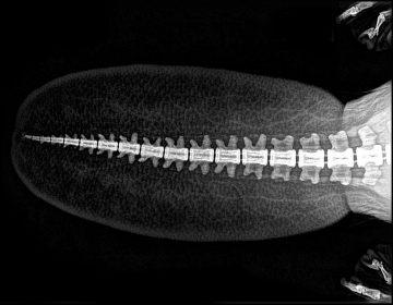¿Sabes cómo son los esqueletos de los animales? Zoológico comparte rayos x de sus habitantes