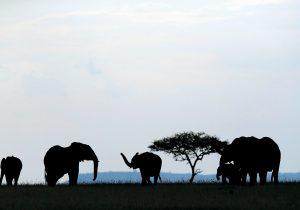 Con licencia para matar elefantes