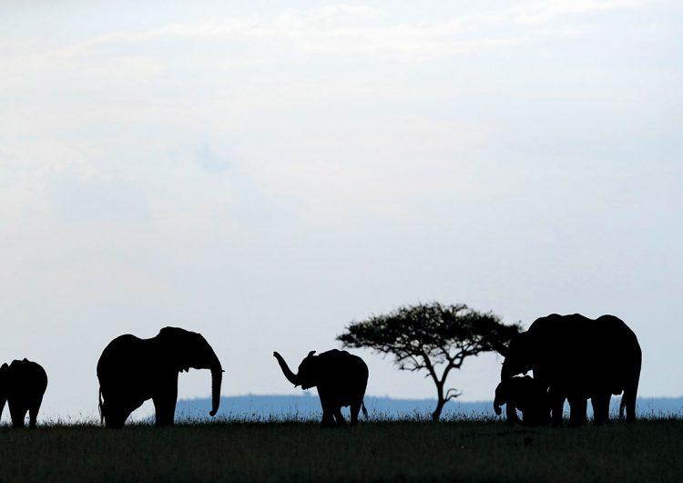 licencia-matar-elefantes-africa