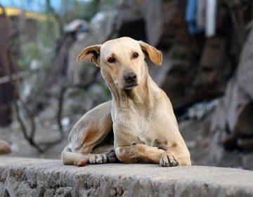 Denuncian ambientalistas envenenamiento de perros para luego robar domicilios
