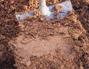 Hallan cinco cuerpos en presunta fosa clandestina en Irapuato