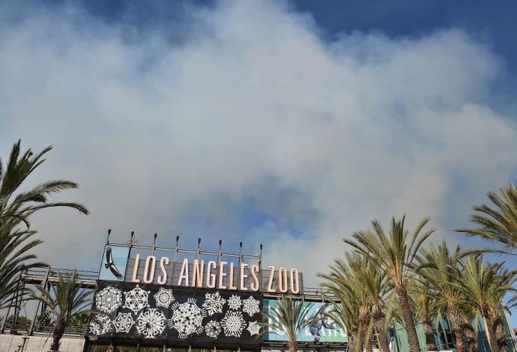 Evacuan a miles de personas por incendio al norte de California; autoridades reportan a 5 personas fallecidas
