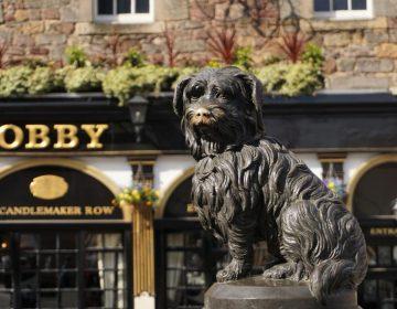 Un perro ha esperado por tres meses en la calle donde su dueña murió