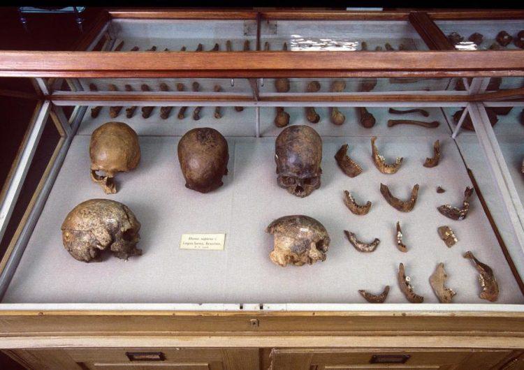 El ADN de una momia de 10,000 años de antigüedad revela secretos de la historia de los nativos americanos