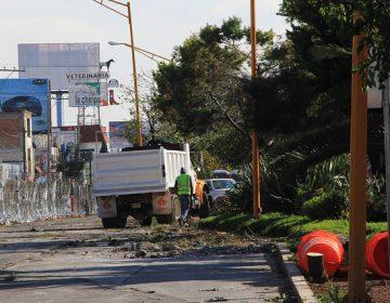 Inician pruebas para reubicar árboles de Camino a San Ignacio