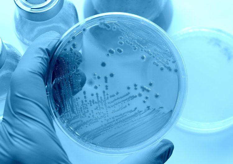Alerta en México: bacterias sin control