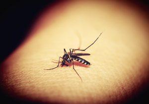 Van 223 casos de dengue grave en Nuevo León