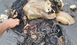 Vasos, botellas y bolsas: el estómago de una ballena muerta…