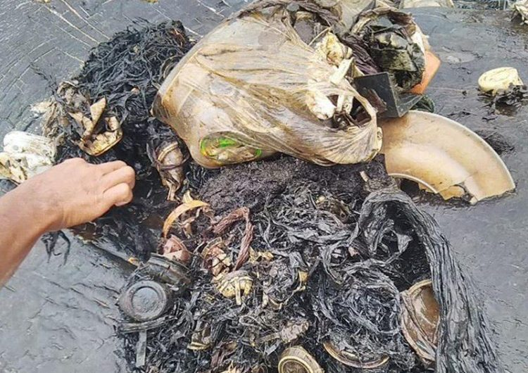 ballena-muerta-plasticos-contaminacion