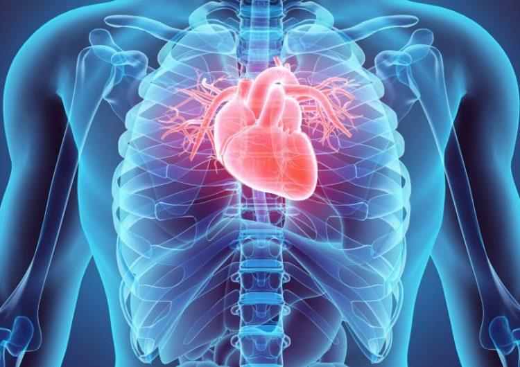 Científicos desarrollan tejido cardiaco humano funcional con células madre