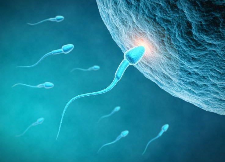 ¿Anticonceptivo para hombres? Científicos crean nuevo gel que reduce el número de espermatozoides