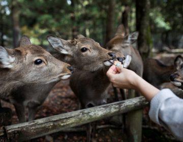"""Cazador furtivo estadounidense es condenado a ver """"Bambi"""" regularmente"""