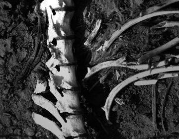 Identifican osamenta encontrada en inmediaciones del Río San Pedro