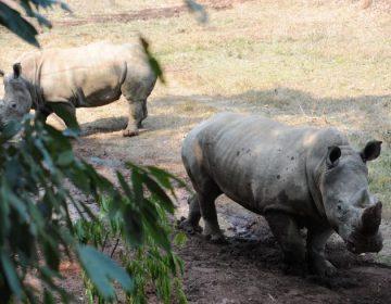 China reactiva comercio de animales en peligro de extinción