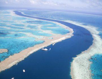 La Gran Barrera de Coral australiana se resiste a morir pese a cambio climático