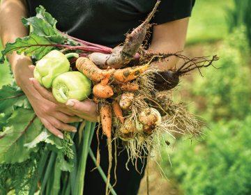 La milpa: la mejor aliada para cumplir la dieta en 2019