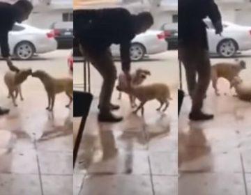 VIDEO | Sujeto que apuñaló a perro en Piedras Negras podría ir a la cárcel