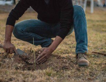 Los hidrocálidos que sembrarán un árbol al día este 2019